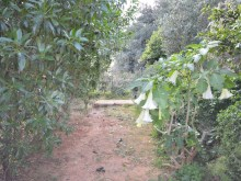 Land with ruin for sale in Albufeira (19)%20/25