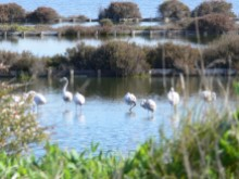 Flamingos da reserva natural%19/21