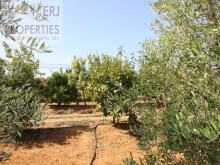 Fruit Trees%2/11