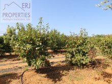 Fruit Trees%5/11