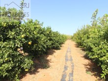 Fruit Trees%6/11