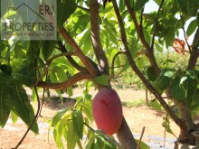Fruit Trees%7/11