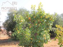 Fruit Trees%8/11