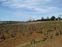 Vineyards Estate, Algarve%4/20