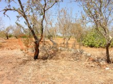 Farm with fruit trees for sale in albufeira, Algarve.%42/42