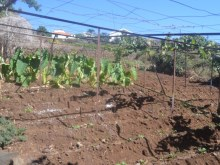 Quinta for Sale in Calheta (2)%3/9