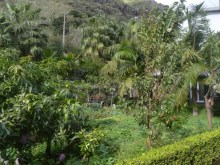 House for Sale with beautiful gardens Prime Properties Madeira Real Estate (2)%4/18