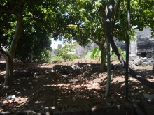 Traditional Madeiran Quinta to restore Prime Properties Madeira Real Estate (6)%7/12