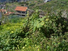 Plot of land for Sale in Ribeira Brava (6)%6/6