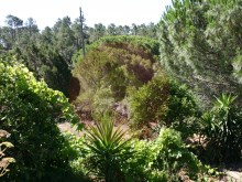 Quinta - Venda - Monchique, Algarve%3/25