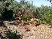 Farm-Sale-Monchique, Algarve%11/25