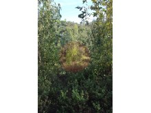 Land-Sale-Alferce-Monchique%10/12