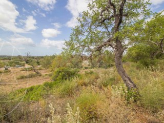 Rural Land Boliqueime - For sale