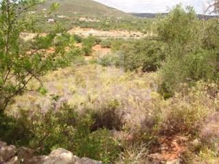 Terreno Rústico Moncarapacho e Fuseta - Venda