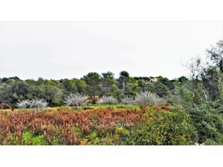 Nice land between S'alqueria Blanca and Porto Petro |