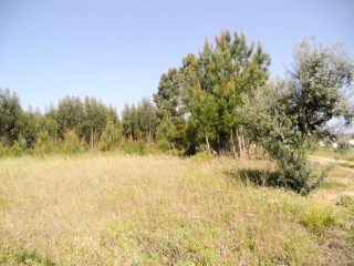 Land with ruin, olive trees and cork oaks, near Franklin, for sale |