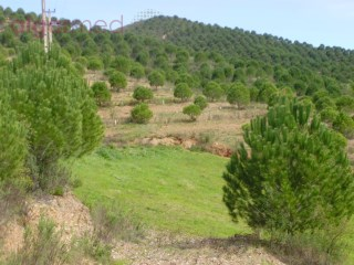ALENTEJO – Ourique - 520.000 m2 estate for sale in Santana da Serra, with a dam |