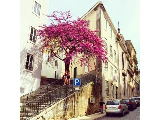 Alfama building with 3 floors to recovery in historic area |