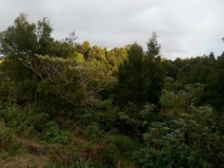 Land with total area of 50,880 m2, currently used for exploration of inert, with licensed quarry.  |