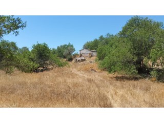 Plot of 1 hectare , built 380 sqm. nice old olive trees |