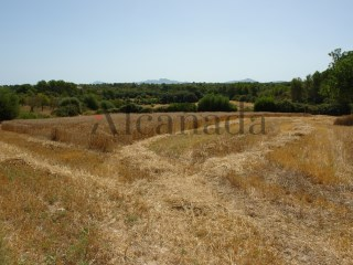 Rustic land in Santa Margalida. |