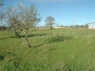 Terreno 3,6 ha - Quelfes |