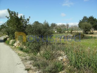 Lote › Silves |