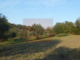 Rustic land in Estoi |