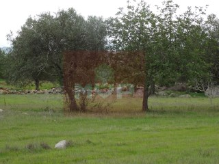 Rustic land in Tavira |