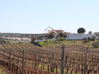 Alentejo Farmhouse with Vineyards for Sale |