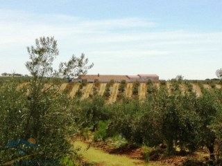 60 Hector Olive Farm with high return in Vidigueira,Beja, Alentejo, Portugal | 1 Bedroom