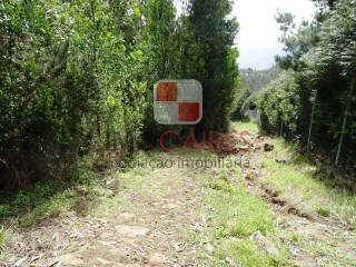 Great land for sale, with 18.500,00 m2 area, located in beautiful Madeira Island mountains |