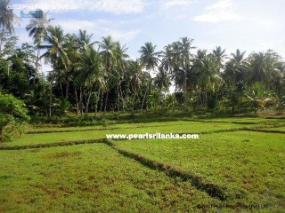 SLOWLY ELEVATED BUILDING PLOT WITH PERFECT BUILDING LAND AND PADDY FIELD AS WELL |