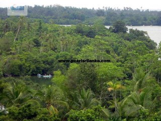 BUILDING PLOT ON KOGGALA LAKE 14 ACRES ESTATE KOGGALA/ 14 ACRES /SQ.M 56000 |