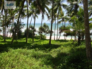 Beach Front with perfect elevation /Building Plot with 260 perches( Sq.m 6500) |