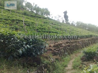 Tea Estate between Waduraba & Kottawa area/ 18 acres (Sq.m 72750) |