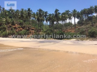 TANGALLE /BEACH FRONT/ BUILDING PLOT/ 1293 PERCHES (Sq.m 32325) (MORE THAN 7 ACRES) |