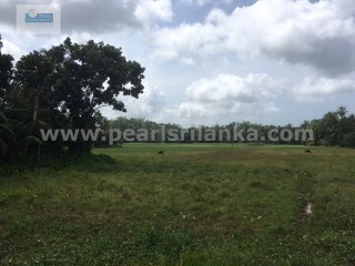 CHEAP BUILDING PLOT WITH 50 PERCHES (SQ.M 1250) LESS THAN 15 MINUTES FROM BEACH |