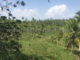 BEAUTIFUL ESTATE IN WELIGAMA FOR VILLA /HOTEL PROJECT (16 ACRES/SQ.M 64,000). |
