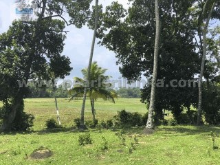 WELIGAMA AREA/MIDIGAMA/PADDY ISLAND TO CREATE A STUNNING VILLA WITH A POOL /195 PERCHES (SQ.M 4875) |