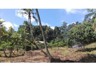 HEENATIGALA AREA/ DHODAMPE/PADDY VIEW BUILDING PLOT WITH 146 PERCHES (SQ.M 3650)  |