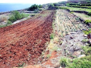 Rustic land with 2788m2, Garajau |