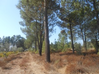 Beautiful land with 7,113 m2 |