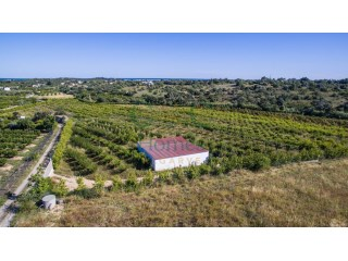 Large farm with ruin in Luz de Tavira |