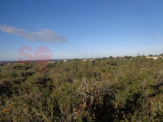 Level plot of 7,570m2 between Vale D'Eguas and Sitio dos Quartos with a sea view. |