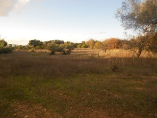 Mixed terrain in Luz de Tavira |