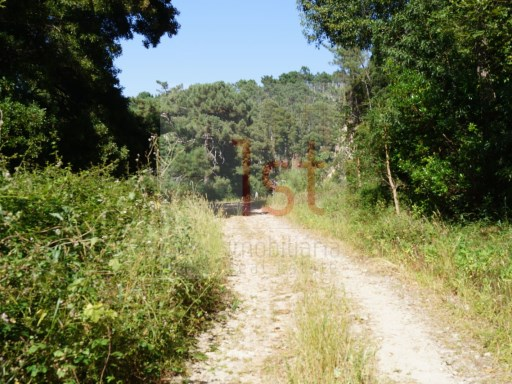 Land next to the Palace, in the Serra de Sintra, with 24,200 m2. |
