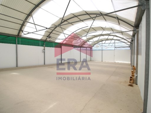 Warehouse and greenhouse in Sierra D ´ El King |