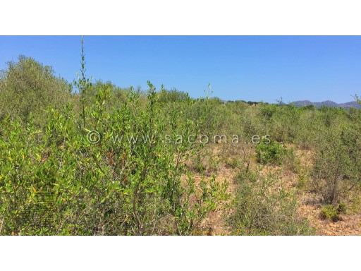MALLORCA, SON CARRIO, BUILDING PLOT OF LAND FOR A HOUSE CONSTRUCTION. |