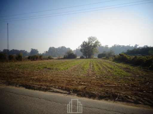 Rural Land › Murtosa |